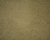 Euodia Tree Barley Carpet Flooring Perth