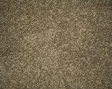 Euodia Tree Riversand Carpet Flooring Perth